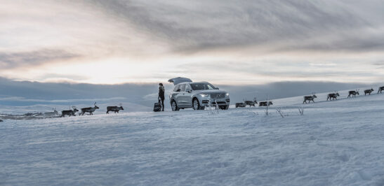 Girl loading car with suitcase in winter landscape while reindeers passing in a single file in the background